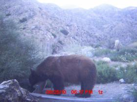 Guide Trail Cam Pics